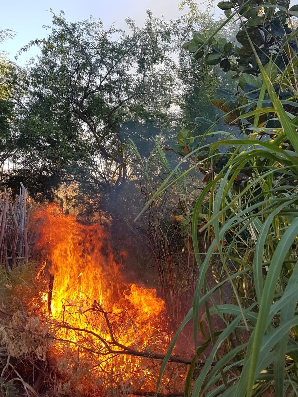 A Força Tática colou fogo nas plantações de maconha.